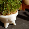 CRESS CRITTER - First Seeds