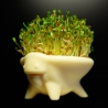CRESS CRITTER - Medicago sativa