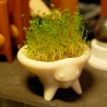 CRESS CRITTER - Nasturtium officinale